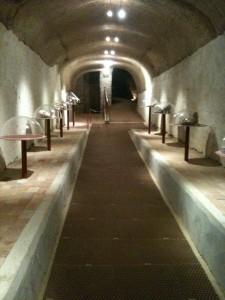 Original cellar turned into a paleontological museum