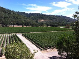 Quintessa vineyards