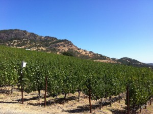 Shafer Hillside Vineyard
