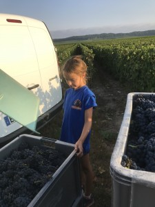 Alice Cailleux, the 5th generation to join Team Ledru in the vines