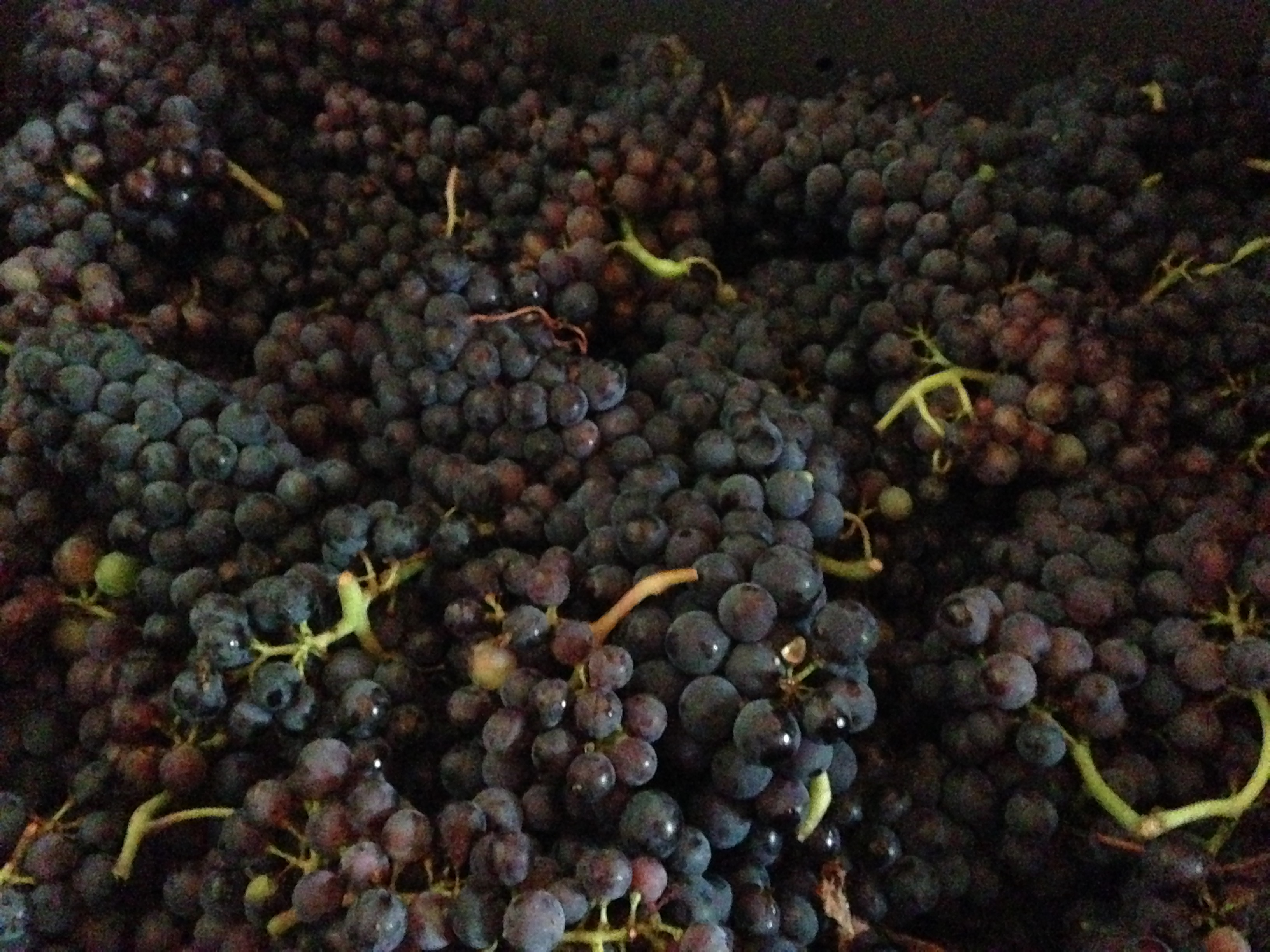 Champagne Harvest 2015 Organic And Biodynamic Grape